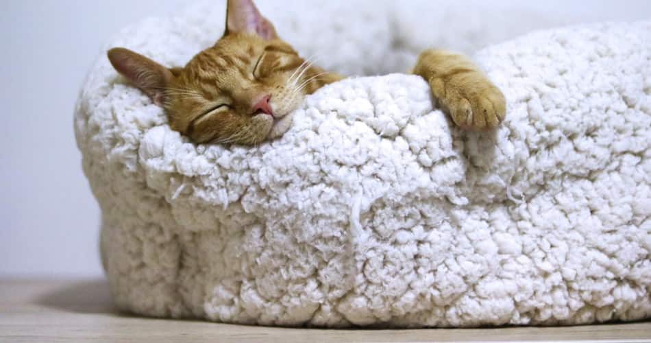 Restful Sleep a benefit of healthy office snacking